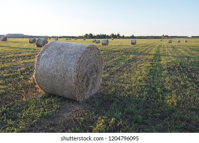 bale of hay on the field in the form of a twisted roll top view, the horizon of the field on the back of the field a lot of the same rolls, leaving the field in the distance