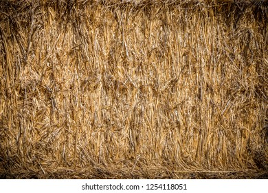 Bale hay straw after havest. Background. Closeup