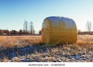 A bale wrapped in the yellow plastic laying on the frosty fields of the Northern Finland. There is already snow and frost on the fields on this late autumn day.