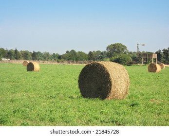 Bales of alfalfa in a field.  Location: Rosario city, Argentina