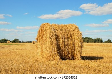 Bales of cylindrical shape on the field