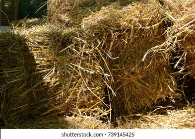 Bales of dry hay of golden color just after harvest
