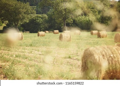 Bales in the field. Tuscany, Italy
