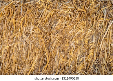 Bales of hay close-up. Natural texture bale of hay for cattle. Agricultural fodder billet.