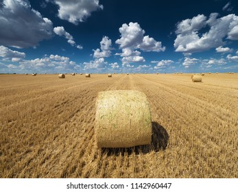 Bales of Hay in  Field of wheat under Blue Sky with Clouds