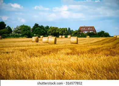 Bales of hay in a large field