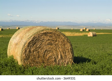 Bales of hay on a farmers field near where the praries meet the mountains.