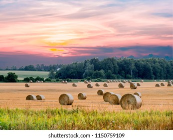 Bales of hay on a harvested hayfield at sunset