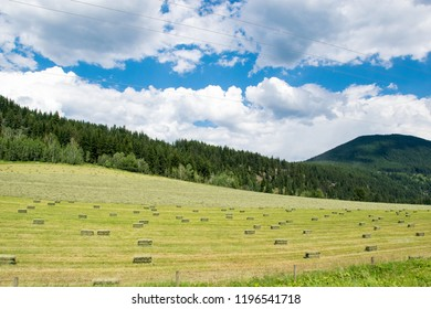Bales of hay scattered on the field after harvesting in Alberta, Canada