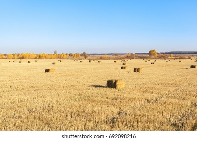 Bales of hay scattered on the field after harvesting