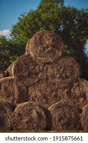 Bales of hay. Hay bales are stacked on the field in large stacks