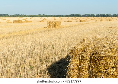 Bales on the harvested field