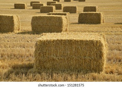 Bales of straw after harvest in a field in Denmark