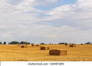 Bales of straw on the field