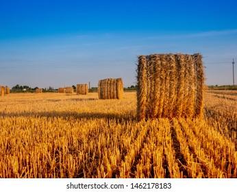 Balet on the field, summer , harvest
