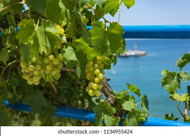 Bali, Crete, Greece - 12.06.2018: Branches of grapes tree lie on the sea background