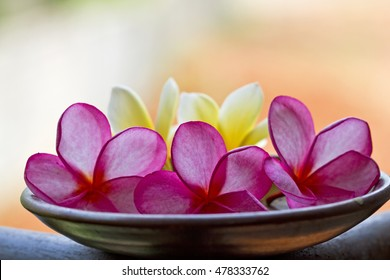 Bali flowers, frangipani flowers, hawaian flowers