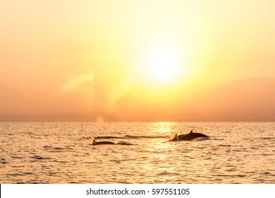 Bali Indonesia free wildlife Dolphin boat Watching at Lovina Beach