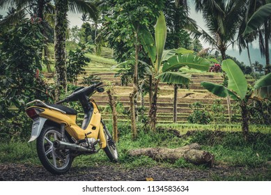 BALI, INDONESIA - JANUARY 9, 2018: Yellow motorbike near rice fields on Bali island, Jatiluwih near Ubud, Indonesia