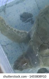 Bali, Indonesia - July 14, 2019: Turtle conservation at Sindhu beach Sanur Bali