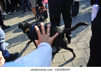 Bali, Indonesia - July 14, 2019: A women trying to touch a k9 custom dog at Bea Cukai on The Street at Bajra Sandhi Renon Field Denpasar