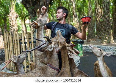 Bali, Indonesia - March 22, 2018: A man feeding deer in Bali Zoo.
