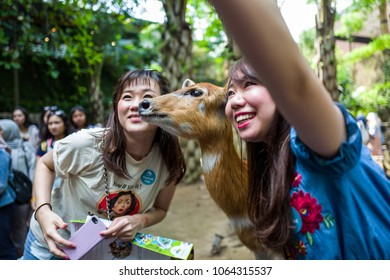 Bali, Indonesia - March 22, 2018: Women making selfie with deer in Bali Zoo