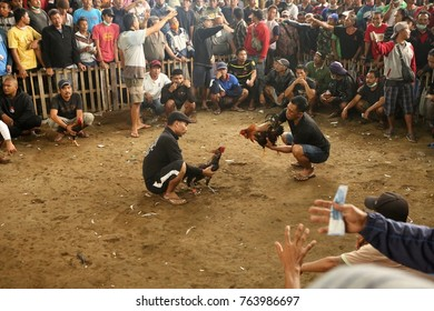 Bali Indonesia, Nongan Village 27th of November 2017. Cock fighting. Local people bring their best prepared cock and let them fight at high stakes. A is still a common ritual in rural areas.