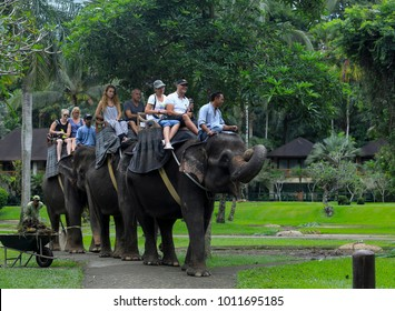 BALI, INDONESIA - NOVEMBER 17, 2017 : Tourist enjoy riding a Sumatran elephant at Mason Elephant Safari Park & Lodge in Ubud, Bali.