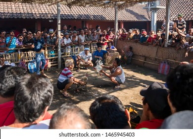 Bali, Indonesia - October 28th 2015: Traditional cockfight in a cock pit with a crowd of men gathered around watching and gambling