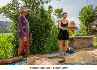 Bali, Indonesia - October 28th 2015: Balinese farm worker. Female tourist sifts & throws rice in a flat basket during Bali tour as a Bali woman helps. Traditional Asian agriculture in a local village.