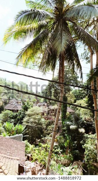 Bali Indonesia Palm Tree Houses Stock Photo Edit Now