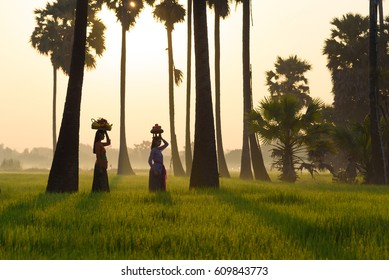 Bali indonesia and rice farm with agriculture people,Asia women in indonesia dress costume dress working in rice fields at rural  Bali city.Bali is nature city of indonesia.