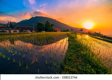 Bali, Indonesia. Sunset over the rice fields reflected in the water