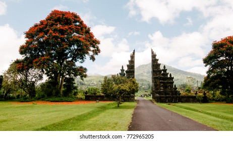 Bali landscape with a big tree