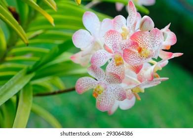 Bali orchid park