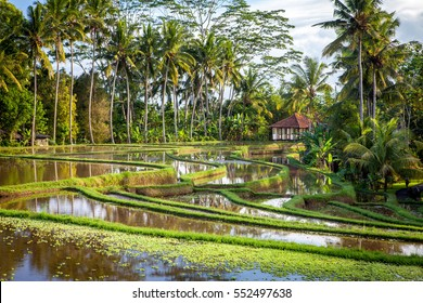 Bali Rice fields with Villa