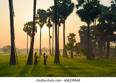 bali ubud field rice at indonesia.The ubud city in bali province at indonesia country are agriculture village. Asia women walk on mountain rice field with sunrise in The bali travel city of indonesia