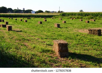 Balikesir Ayvalik straw farm summer turkey
