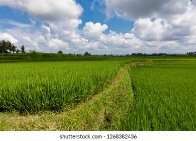 Balinese Countryside with Rice Fields and Blue Sky with Clouds, Bali, Indonesia