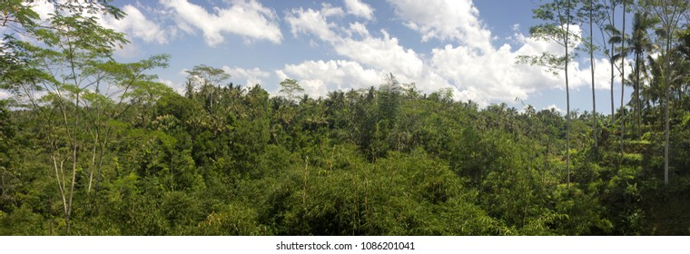Balinese forest panoramic photo