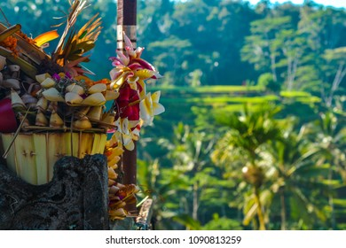 """Balinese Hindu offering to gods """"Canang Sari"""" containing flowers, holds on a carved stone temple. Green Rice terraces covering the background surrounded by coconut trees."""