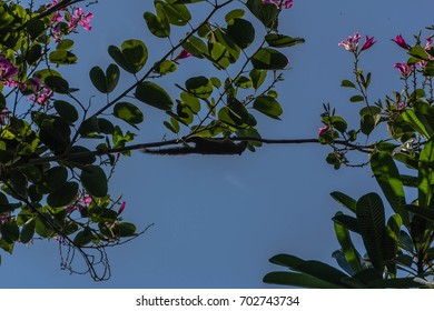 a balinese native squirrel climbing in the trees