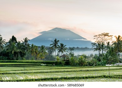 Balinese rice field early morning with sun rise over fogs and palm tree create layer in front of Mount Agung