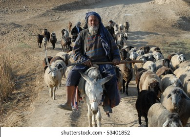 BALKH, AFGHANISTAN - NOV 3: Afghan sheep herder, from Balkh city, herds his sheep on November 3, 2009 outside Balkh city, Balkh province, Afghanistan. Balkh is one of the oldest cities in the world.