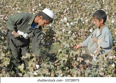BALKH - NOVEMBER 4: Noorullah, 10, and Islamuddin, 7, from Balkh city, Balkh, pick cotton November 4, 2009 in Balkh, northern Afghanistan. They are illiterate.