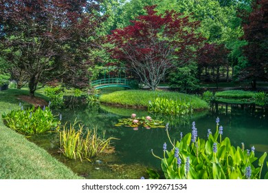 Ball Ground, Georgia USA - June 8, 2018  Water garden with a bridge crossing over the pond with waterlilies and other aquatic plants in bloom on a sunny day in summer at Gibbs gardens in north Georgia