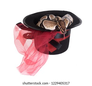 The ball python (Python regius), royal python. Snake in magical black hat. Isolated on white background