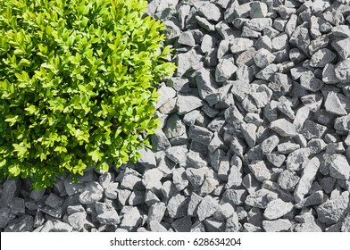 Ball shaped box tree in grey gravel bed - top view; Modern garden design; Easy care landscape design; Topiary plant in graveled area in close up