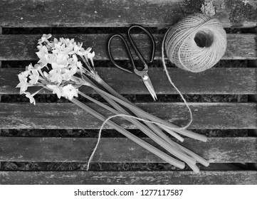 Ball of twine and gardening scissors with a bunch of white narcissi flowers on a wooden slat bench - monochrome processing